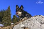 Mein Hund Leon